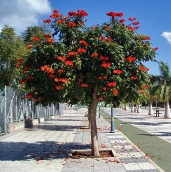 jual pohon pelindung bandung